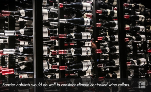 22 Mancave Support 3 - Wine Cellars.jpg